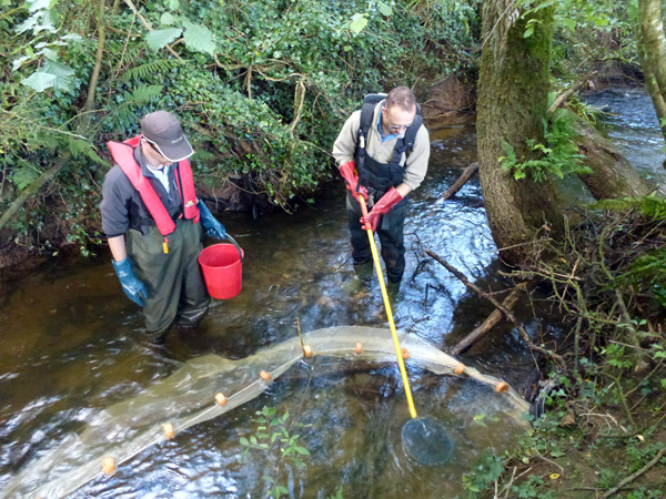 Plate 1 Juvenile lamprey survey using electrofishing