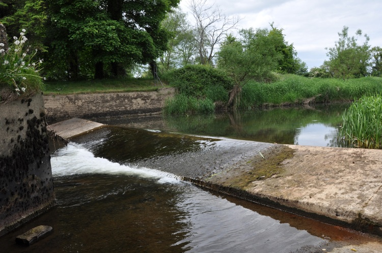Hydrometric weirs are also a potential barrier to migrating lampreys: Clodiagh River at Rathkennan Bridge (River Suir SAC).