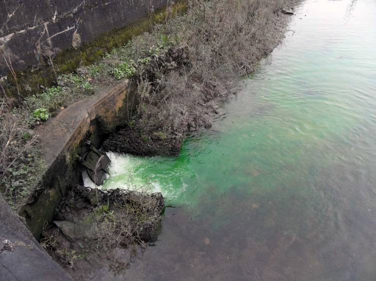 Pollution in Limerick City; this dye probably looks worse than it is to lampreys and other fish