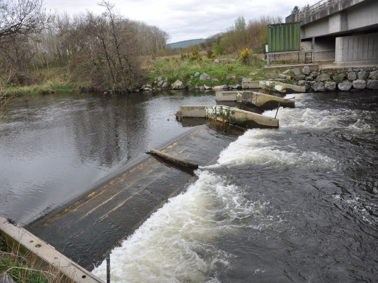 Inland Fisheries Ireland's salmon counter is a barrier to migration to river lampreys, brook lampreys and eels.