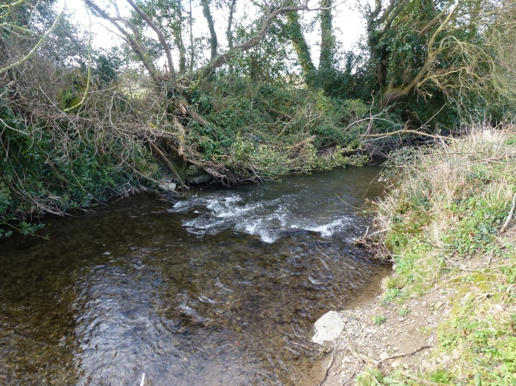 The stream where the book lampreys were recorded spawning